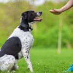 Comment entraîner votre chien à vous écouter 6