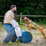 Dresser le chien pour un travail 5