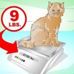 Des régimes pour aider votre chat maigre à prendre du poids 6