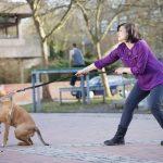 L'importance d'un chien obéissant 6