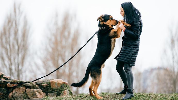 Pourquoi s'embêter avec la formation d'obéissance de chien?