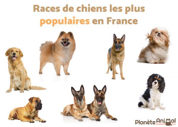 Races de chiens populaires