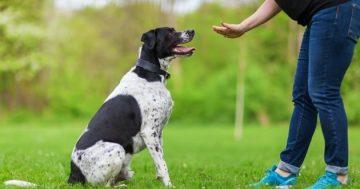 comment dresser un chien pour les proprietaires danimaux debutants