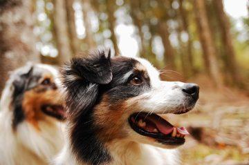 devriez vous avoir un chien questions reflechies pour savoir si cest le bon moment