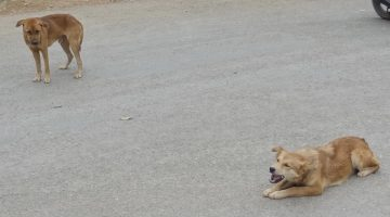 votre chien fait il jamais semblant de devenir sourd lorsque vous lui donnez un ordre