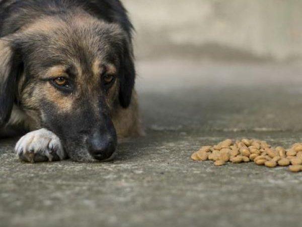 Combien de temps les chiens peuvent-ils rester sans manger?